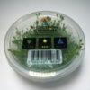Glossostigma elatinoides - tissue cultur