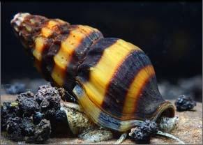 Amphibian & Crustacean