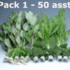 Plant Pack 1 (50 Pieces)