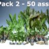 Plant Pack 2 (50 Pieces)