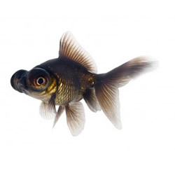 Wholesale suppliers of tropical, ornamental fish & aquatic plants to