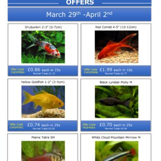 This Week's Special Offers