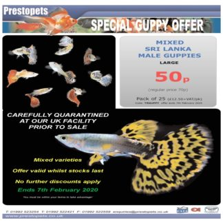 Manager's Special Offers